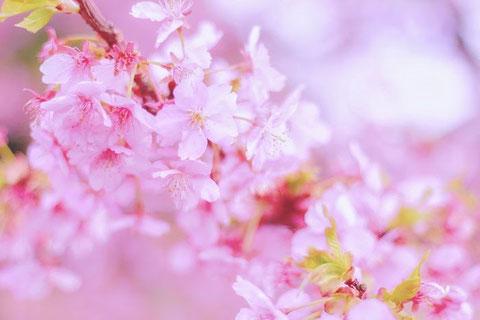 春のシーズンフェイシャル@anelanspa