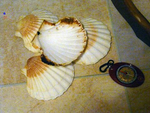 Comment élever son taux vibratoire avec des coquilles saint Jacques? Image