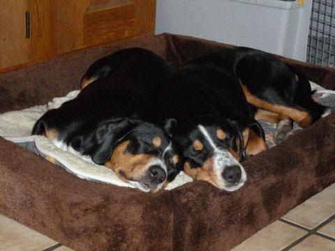 Branca und Abbie = Ulla's Dreamteam