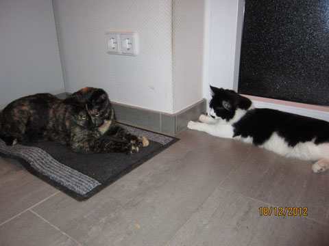 Amy und Tiffi verstehen sich gut und es wird so manches Mal wild rumgetobt. Amy liegt übrigens auf der für die Hundis versteckten Futtertasche........