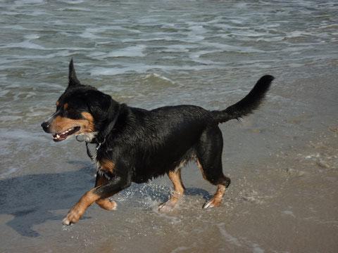 Okt. 2012 - Anca's Papa EMIL war an der Ostsee und hatte sichtlich Spaß.