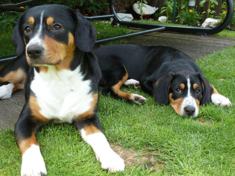 Branca und ihre Abbie (Mitte Juni '12)