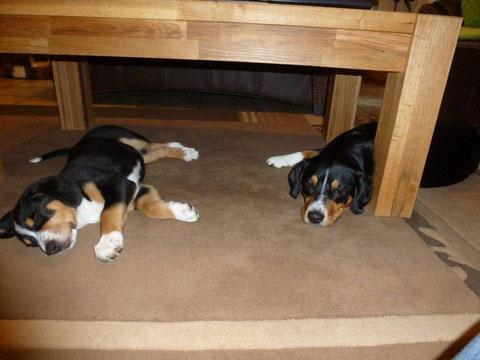 04,05. Abbie am ersten Tag in ihrem neuen Zuhause mit Branca