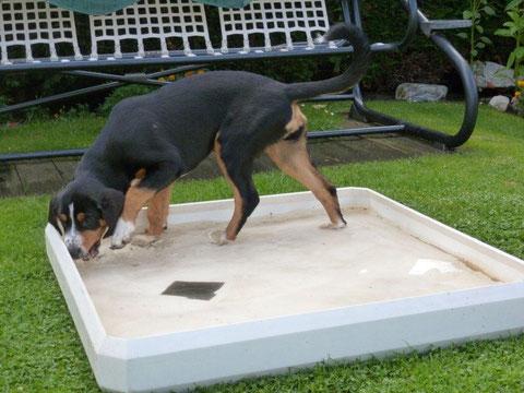 Abbie hat von Herrchen einen Pool bekommen.