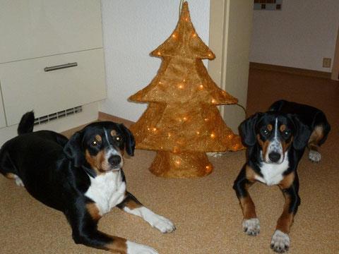 Branca und Abbie haben Grüsse zum 1. Advent geschickt - liebe Grüsse zurück!