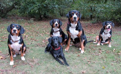Grüsse von der 'Verwandtschaft': Benja-Bone, Maycie, Annifee, Ambra und Emily - danke Jutta