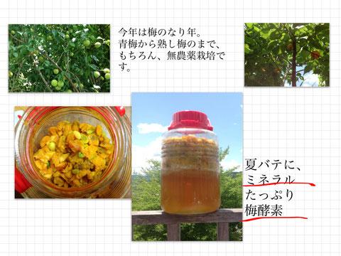 ●青梅、熟した梅の両方を使った夏酵素ジュース:梅ジュース