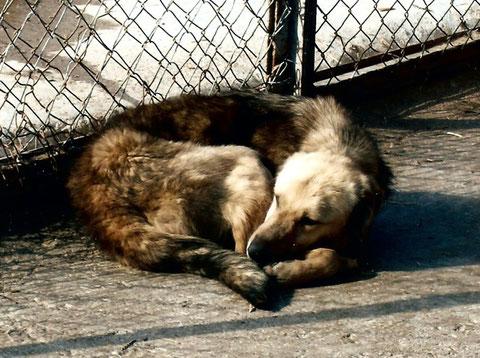 Tierhilfe FOÇA, Tierschutz Türkei, Izmir