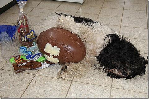 ISCH KANN NISCH MEHR!! Eins von den 20 Eiern war wohl schlecht...