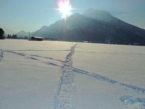 Winter in Grödig