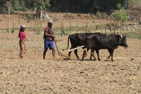 2011 Népal, région d'Ilam