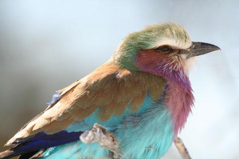 2009 oiseaux d'Afrique