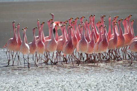 2007 Oiseaux d'Amérique du Sud