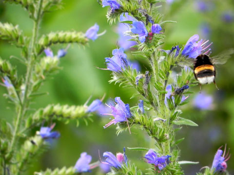 Im Blütenrausch - Text und Foto von Brigitte Berkenkopf