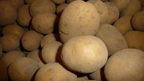Belana Kartoffeln Berlin Lieferservice