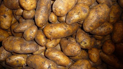 Moor-Sieglinde Kartoffeln Berlin Lieferservice