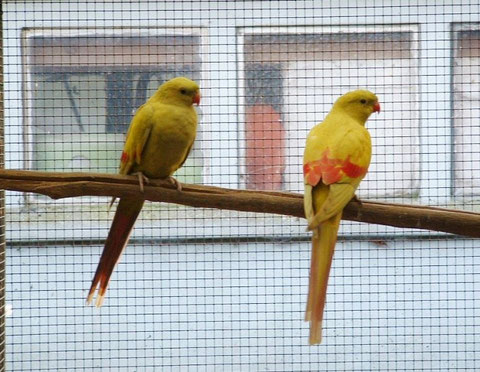 Pastel geel x pastel geel - koppel 2