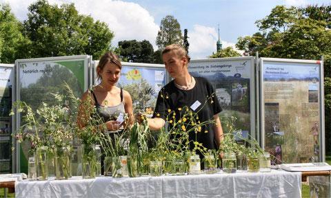 Ausstellung mit Blütenpflanzenquiz (Bild: K. Weddeling)