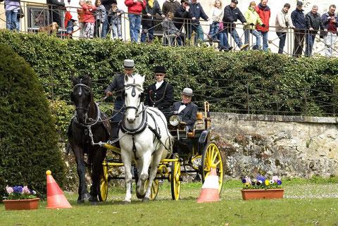 Il tiro a due di Christian Mettler in piena azione, seguito da un pubblico attento, durante il percorso ad ostacoli all'interno del parco del castello di La Sarraz.
