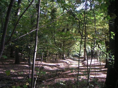 Waldweg entlang kleines Flüsschen – die Becke