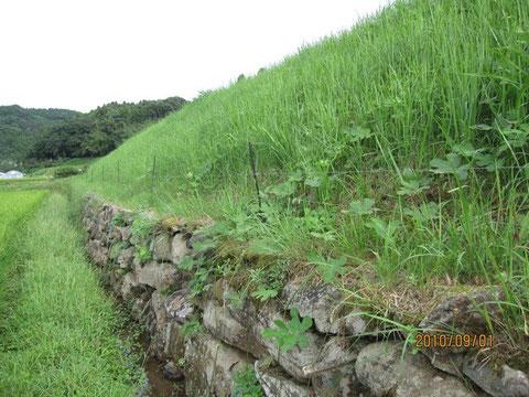 イノシシの電柵の下も刈る。そうしないと、草が通電をじゃまするのだ。