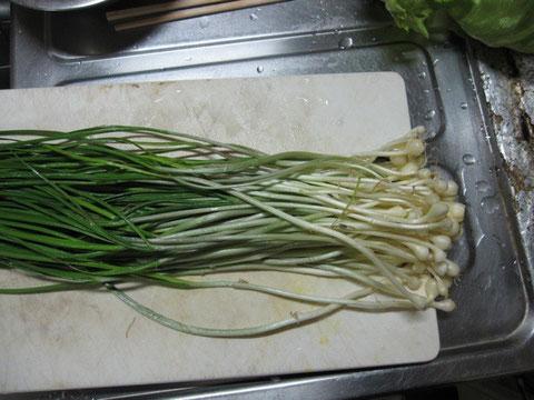 野蒜洗うと、葱とニラの間くらいに見える。健胃、体温を温める効果あり。