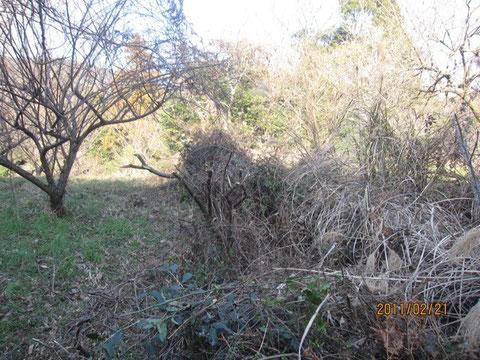 後、梅の木に葛が絡まっていたのデス。