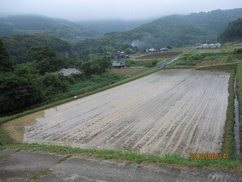 保植を終えた田圃。梅雨に入った。