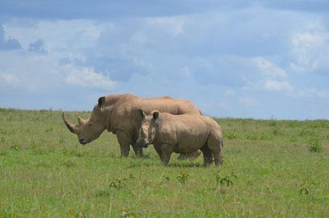 Nashörner der Solio Ranch, Ranger sind stolz haben im letzten Jahr keines Nashorn verloren.