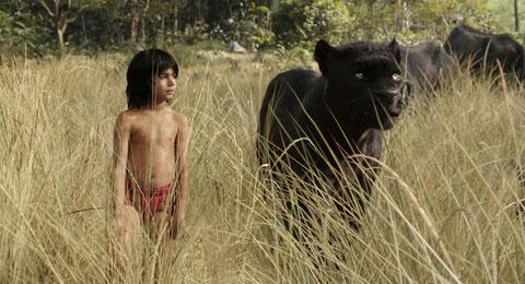 Bagheera protège Mowwgli, pour qui la jungle est devenue dangereuse (©The Walt Diney Company).