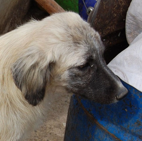 TESSA e-V., Tierschutztürkei, Izmir, foca, nilgün karsilayan,Pate werden,Tieren helfen