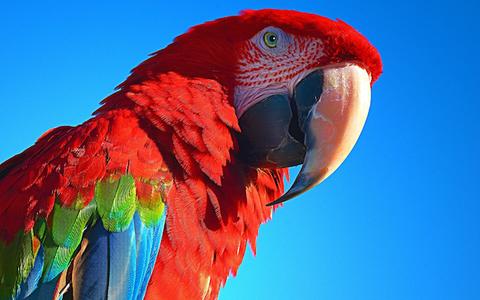 Von Gammarus werden bei Vögeln die Federn glänzend und bekommen kräftige Farben