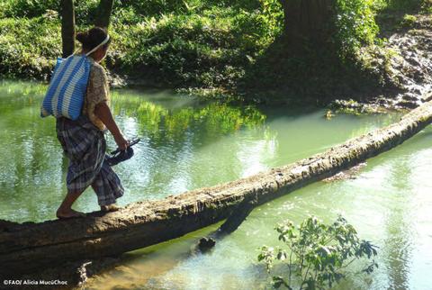 Mujer maya cruzando un río en Guatemala a través de un árbol. Foto: Alicia MucúChoc/ FAO