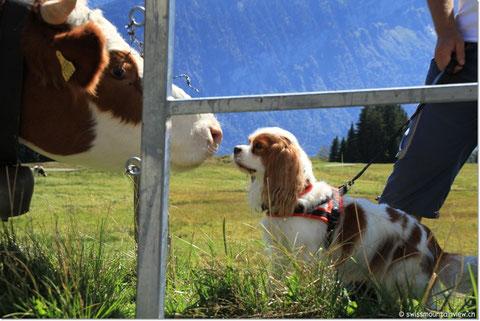 Sicherheitshalber bleiben wir hinter dem Zaun.