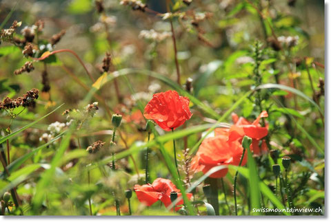 Obwohl, Blumen und Schmetterlinge hat es unzählige - eine Augenweide, auch für Mama.