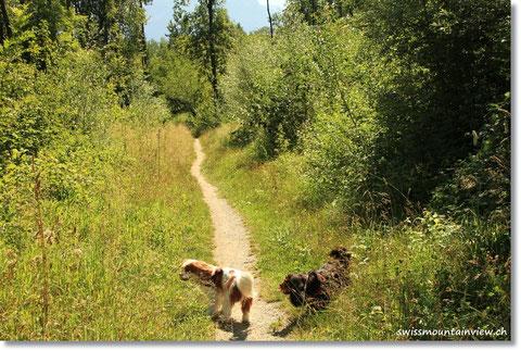 Auf geht's ins Naturschutzgebiet. Hier gibt es unzählige Spazierwege, die es zu entdecken gibt.