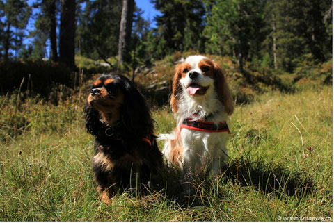 Jucy und Charly  - the swiss (mountain) doggies :)