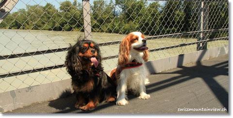 Jucy und Charly posieren auf der Brück über die Rhone.