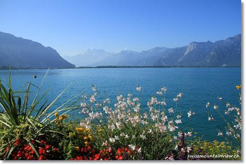 schönen Genfersee, genauer gesagt in den Aquaparc.ch