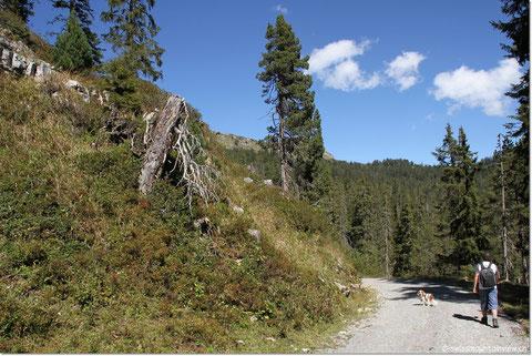 Da haben wir aber dann den direkten Weg hinunter in die Waldegg genommen.