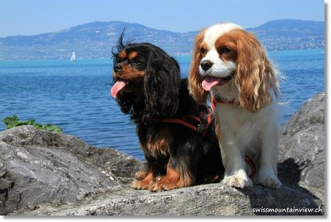 Swissdoggies weit gereist, vom Bodensee (anfangs Juli)