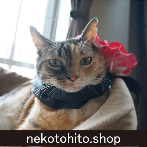 nekotohito.shop;猫と人,nekotohito,ネコトヒト