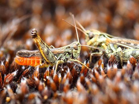 Wie im waren Leben: Die Männchen müssen sich Mühe geben die Weibchen zu beeindrucken.