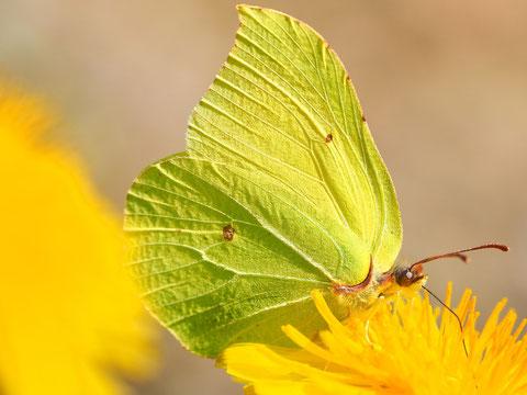 Das wahre Frühlingsbild: Farborgie in Gelb.