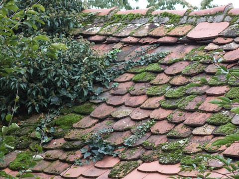 Dach mit Moos und teilweise zugewuchert