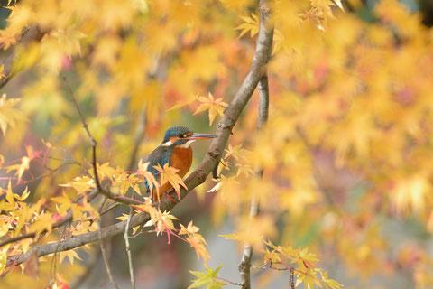 秋のページへ。