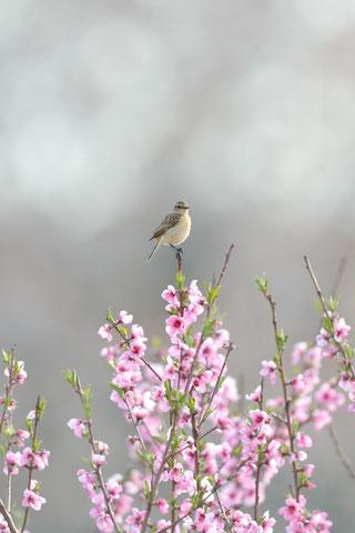 春のページへ。