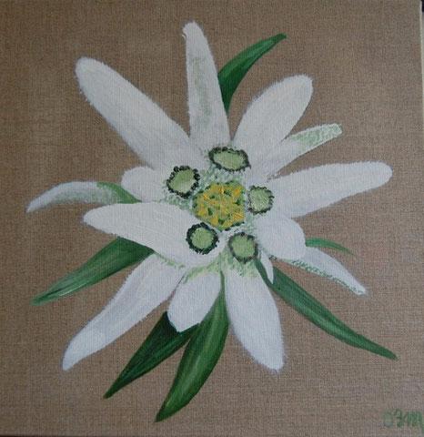 Edelweiss, huile sur toile 40 x 40, 2010 (vendu)