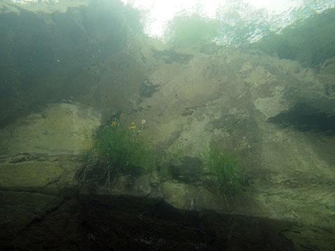Gänseblümchen von unten