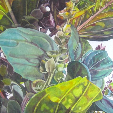 ocimum basilicum IV 2014 70x60cm oil/canvas